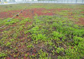 ibv - zelena strecha icopal 270x190 - Ploché strechy