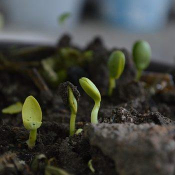 ibv - grown up 1637302 640 350x350 - Kompostér pre vašu záhradu aj dvor