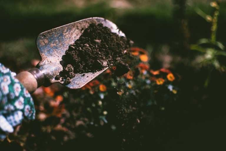ibv - jesen zahrada 768x512 - Čas, keď v záhrade padá lístie
