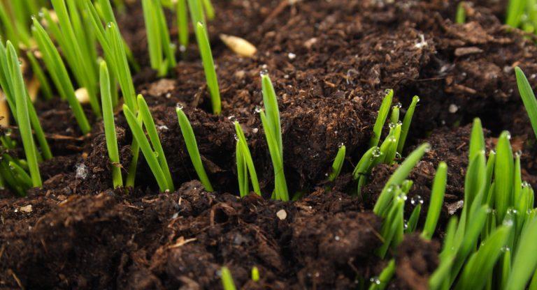 ibv - Blog Web 4 768x416 - 5x prvá pomoc pre trávnik po zime